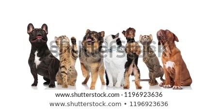 team of seven cute dogs panting and looking up stock photo © feedough