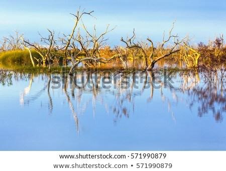 Sunset reflections on Lake Menindee outback Australia Stock photo © lovleah
