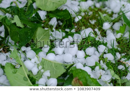 Hail on the grass Stock photo © cookelma