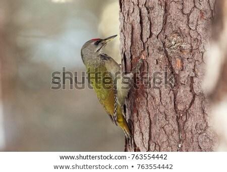 Női portré madárles vadvilág fotózás fa Stock fotó © Arsgera