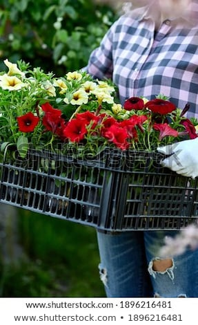 Gardener is carrying flowers in crate at shop. Stock photo © Illia