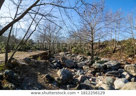 Száraz kövek kövek textúra erdő ecset Stock fotó © Frankljr