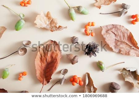 hat and fallen autumn leaves on white background Stock photo © dolgachov