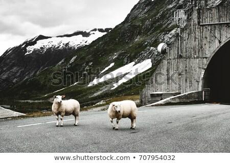 トンネル 車 ノルウェー ヨーロッパ 単純な 建物 ストックフォト © gewoldi