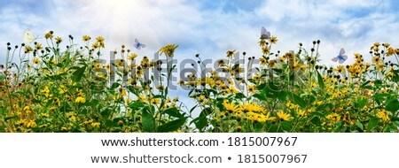 Artichoke plant  in a summer sunny field Stock photo © lunamarina