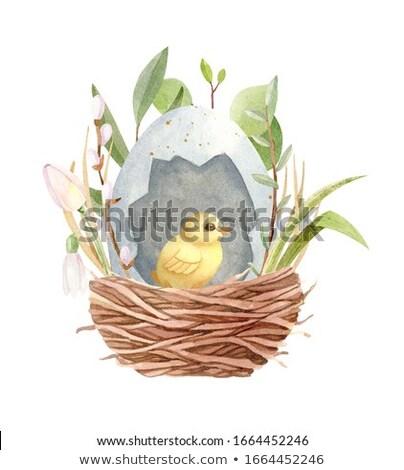 lege · nest · geïsoleerd · witte · Pasen · home - stockfoto © natika