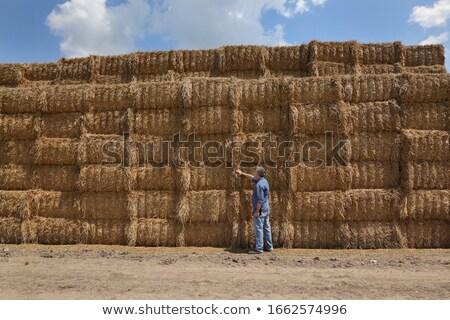 農家 俵 わら フィールド 調べる 触れる ストックフォト © simazoran