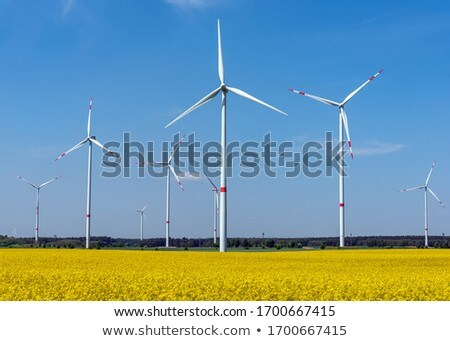 Power lines, wind turbines and a flowering canola field Stock photo © elxeneize
