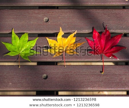 fall japanese maple leaves on wood bench stock photo © davidgn