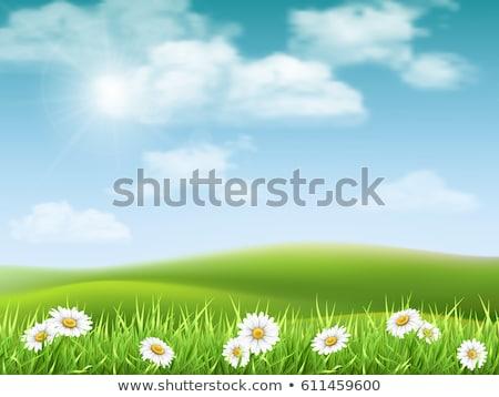 Grama verde natureza sol verão grupo planta Foto stock © ozaiachin