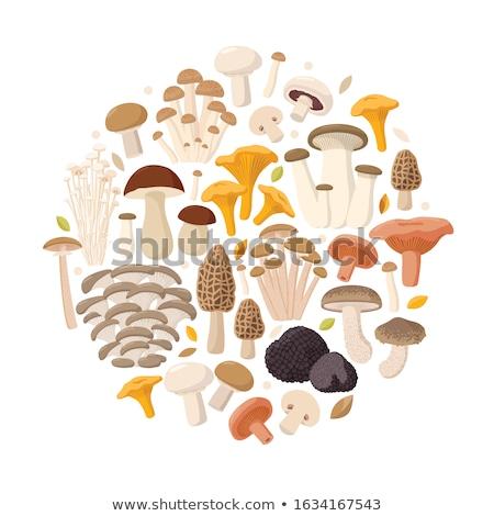Chanterelles on white background. Vector illustration Stock photo © ConceptCafe