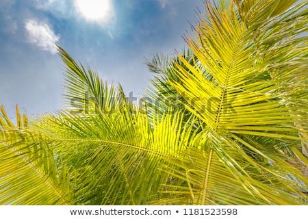Pálmafa napos égbolt hdr természet pálma Stock fotó © moses