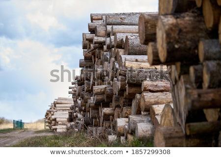 vág · tűzifa · fa · munka · energia · üzemanyag - stock fotó © pedrosala