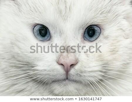 Mulher veterinário gatinho gaiola escritório médico Foto stock © wavebreak_media
