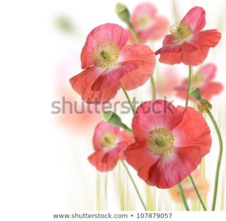 Foto stock: Vermelho · verde · campo · borboleta · folha