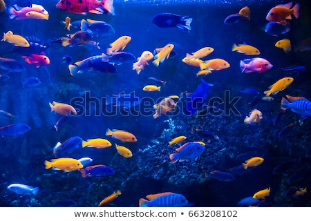 Stock photo: Tropical fish with corals and algae in blue water. Beautiful background of the underwater world