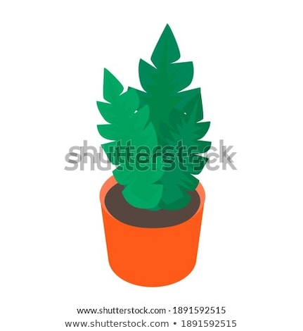 Green Houseplant in Vase, Tropical Herb Vector Stock photo © robuart