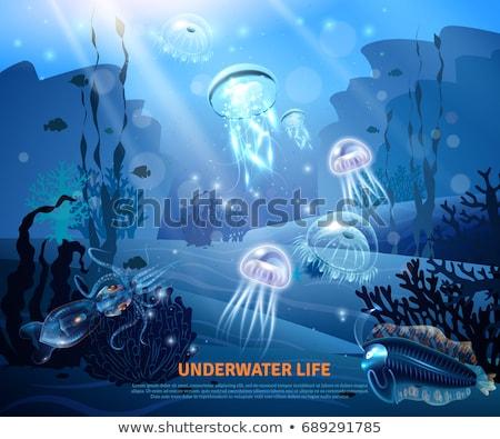 Decorativo subaquático mundo mar vida vetor Foto stock © Margolana