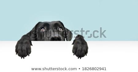 ansiedade · ilustração · luz · projeto - foto stock © w20er