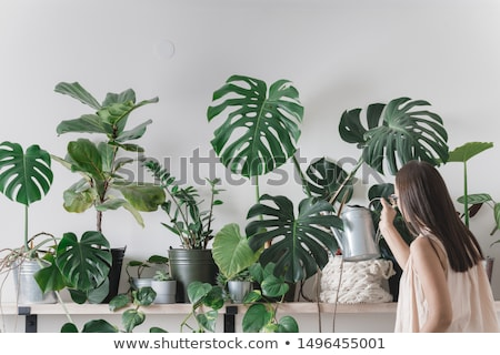 A houseplant Stock photo © bluering