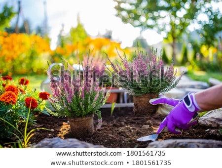 Sonbahar bahçıvanlık çim sonbahar ayakta boş Stok fotoğraf © IS2