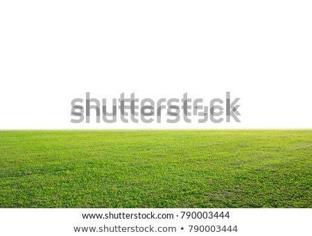 bella · erba · verde · texture · campo · da · golf · sfondo · estate - foto d'archivio © smuay
