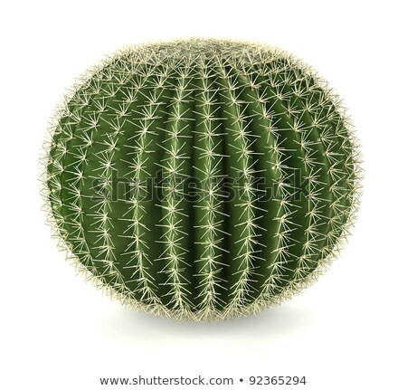 Foto stock: Cacto · esfera · bola · textura · folha · jardim