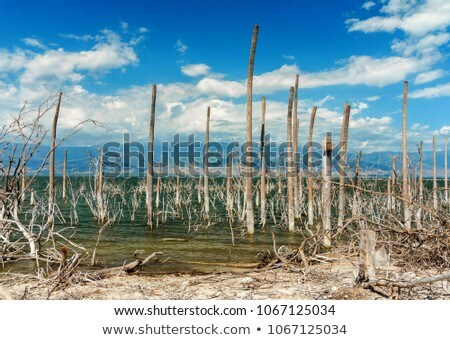 A desert with a tree without leaves Stock photo © bluering