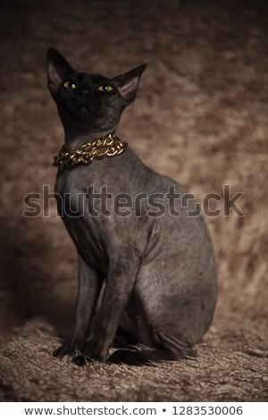 Singolare cat indossare oro up Foto d'archivio © feedough