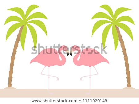Paisaje flamenco silueta ilustración fauna naturaleza Foto stock © barsrsind