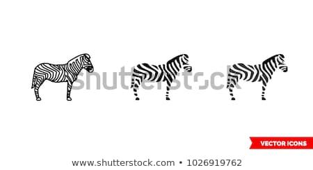 Zebra ikon vektör örnek imzalamak Stok fotoğraf © pikepicture