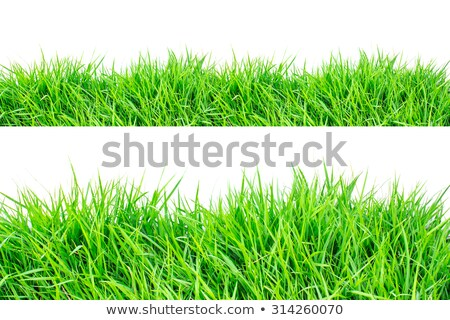 Greensward and green grass Stock photo © alrisha