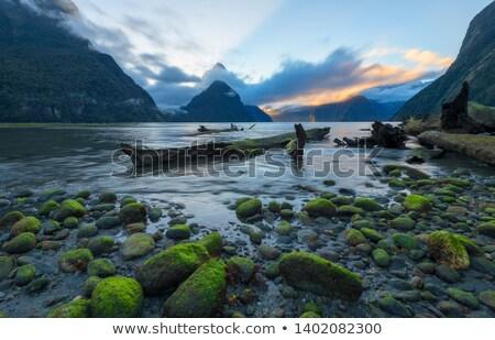 Estrada de cascalho parque Nova Zelândia estrada natureza paisagem Foto stock © naumoid