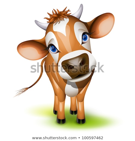 Little jersey cow stock photo © tilo