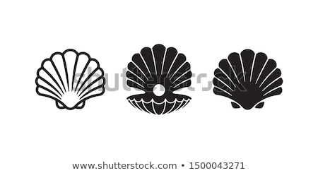 Kagylók kagyló absztrakt természet terv háttér Stock fotó © rbouwman
