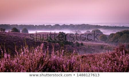 области · цветок · розовый · луговой - Сток-фото © kaycee