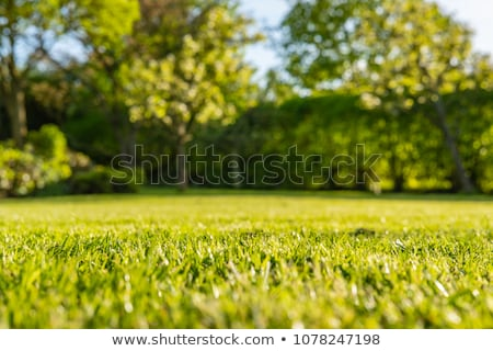 fresh mowed Stock photo © kaycee