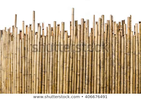 Bambu çit eski hayvanat bahçesi ahşap doğa Stok fotoğraf © unweit