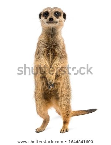Küçük ayakta bakıyor etrafında doğa hayvanlar Stok fotoğraf © unweit
