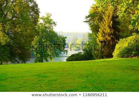 романтические озеро человека природы пару поцелуй Сток-фото © photography33