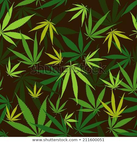 конопля · марихуаны · листьев · вектора · различный - Сток-фото © pashabo