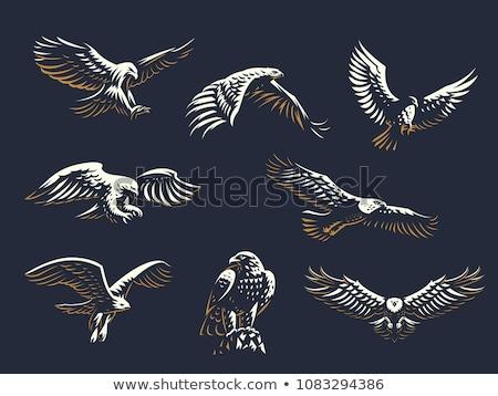 Foto stock: Gráfico · cabeça · careca · Águia · mascote · vetor