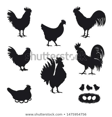 sziluett · kakas · háttér · madár · fekete · szabadság - stock fotó © perysty