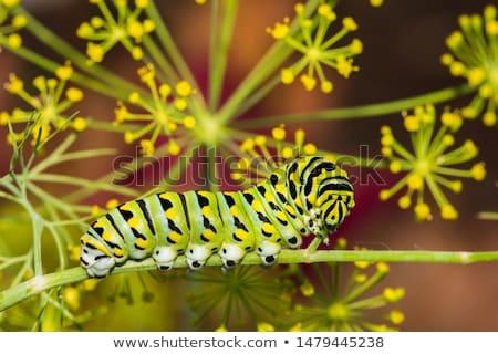 verde · lagarta · folha · isolado · branco - foto stock © melpomene