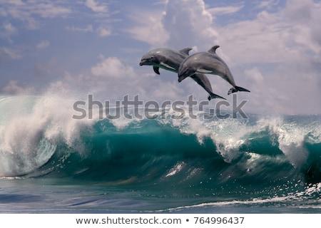 dois · golfinhos · saltando · água · isolado · branco - foto stock © Silvek