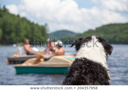 dog on the cottage dock stock photo © gordo25