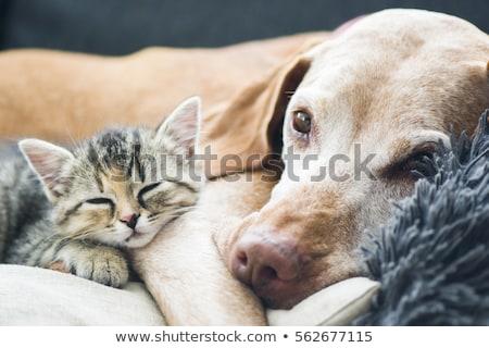 кошки · расслабляющая · саду · улыбка · лице · волос - Сток-фото © meinzahn