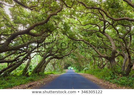 Road covered by a canopy of trees. Stock photo © DonLand