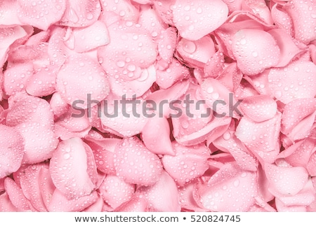 wet close up macro rose petals water drops stock photo © lunamarina