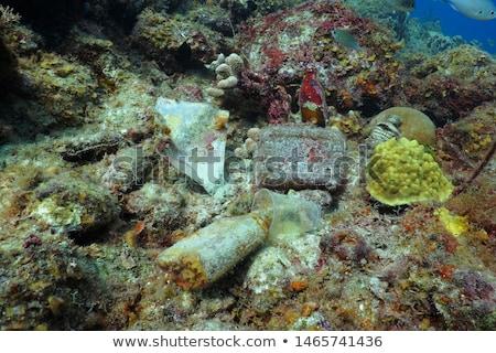 Fles koraalrif oude groene kleurrijk zee Stockfoto © thomaseder